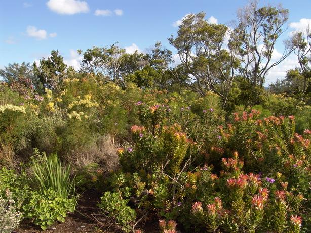 Plantes du jardin botanique harold porter for Plantes du jardin