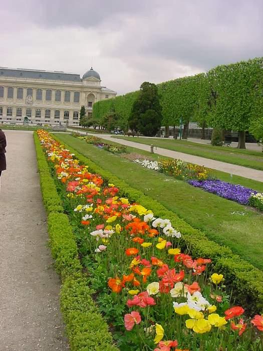 Jardin des plantes paris mytho fleurs des plantes des arbustes des arbres des jardins botaniques for Jardins de plantes